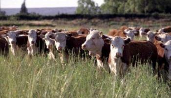 Los ganaderos pierden competitividad