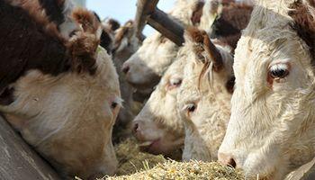 Combinación de ganadería y minería en Chubut