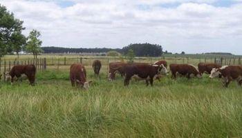 El NEA fortalece a la ganadería argentina