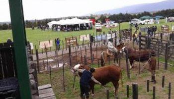 La ganadería del NOA no es ajena a la coyuntura