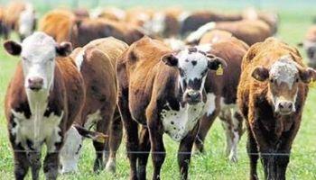 En Uruguay, la ganadería evita la recesión