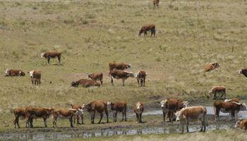 Predios ganaderos uruguayos afectados por la falta de lluvias