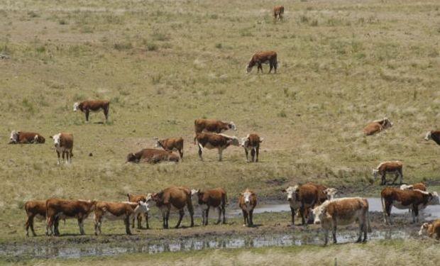 Se agudiza la falta de agua en los predios ganaderos.