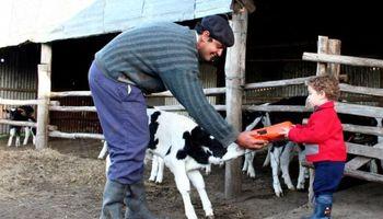 Uruguay: Tambos gastan menos en genética frente a la crisis