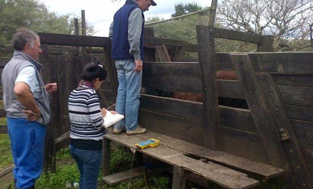 La suplementación fue decisiva para que el ganado bovino aumente de peso diariamente, crezca en su carga animal y avance en productividad.