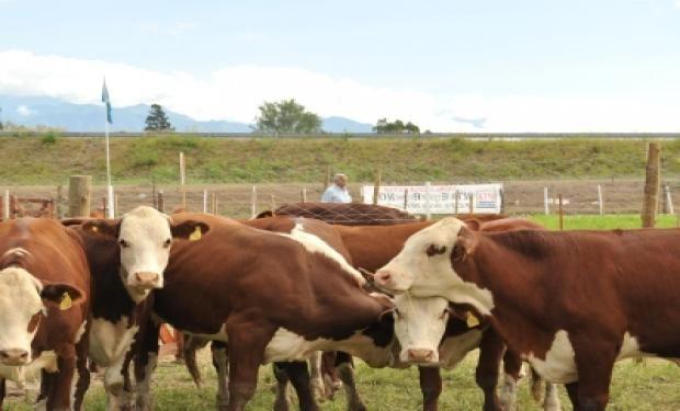 Hay muchas oportunidades en el mercado internacional para la carne argentina.