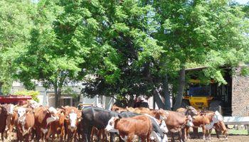 En algunas zonas, la ganadería deja más margen que la soja