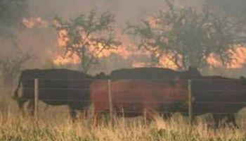 En Río Negro se quemó 20 % de los campos destinados a la ganadería bovina