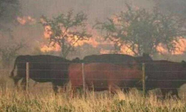 Los campos quemados.