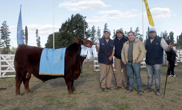Los mejores reproductores de la Exposición Rural de Río Cuarto.
