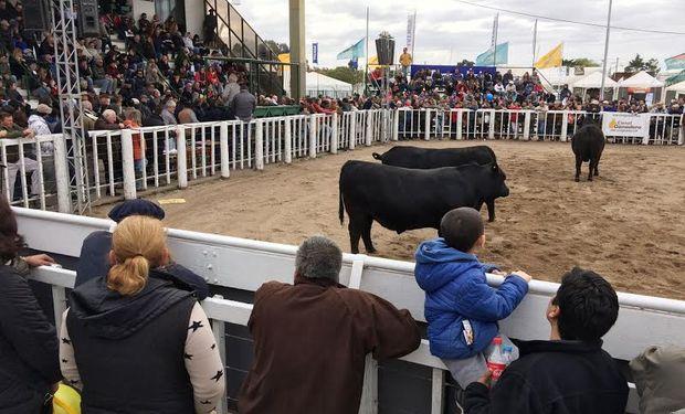 Gran campeón Hereford en La Rural de Río Cuarto.
