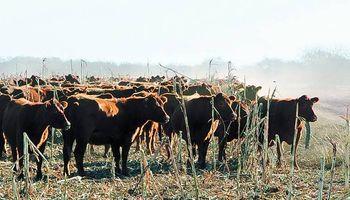 El agua, un factor clave en la ganadería