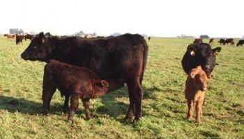 La ganadería mixta es una alternativa sustentable