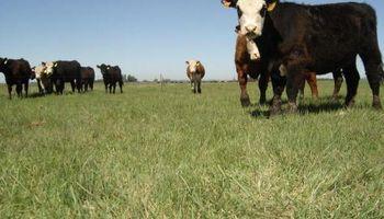 Claves para potenciar la producción de pasturas