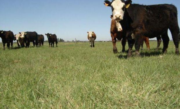 En gran parte de la región Pampeana, la primavera y parte del verano es la época de mayor producción de forrajes.