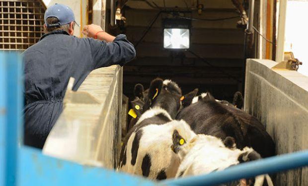 Uruguay exportó 7 mil cabezas de ganado lechero a China