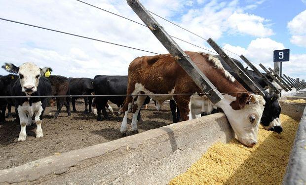 La tecnología es la gran aliada de la ganadería en tiempo de coronavirus