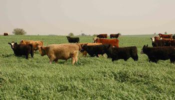Por qué la exportación de carne no atenta contra el consumo interno