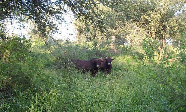 Propuesta del INTA para el manejo eficiente y rentable de la producción bovina y forestal.