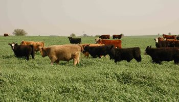 Santa Fe busca prevenir la propagación de la tripanosomiasis bovina
