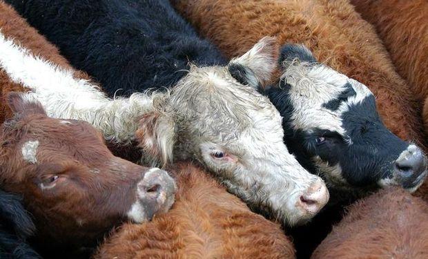 Comenzó la subvención de los feedlots que tomaron un rol preponderante en el suministro de la carne que comemos.