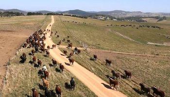 Los ganaderos ahora pueden usar satélites para cuidar sus rebaños