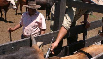 Cómo proteger al ganado del carbunclo bacteridiano