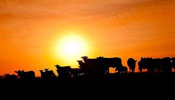 La ganadería argentina, al vaivén de las expectativas