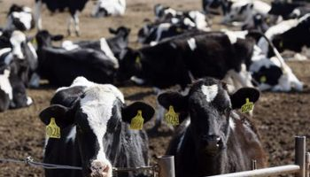 Uruguay exhorta a cuidar ganado ante ola de calor