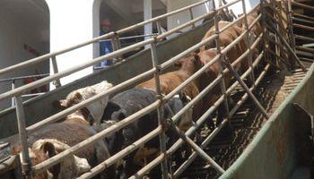 Uruguay: exportaciones de ganado en pie se incrementaron un 24%