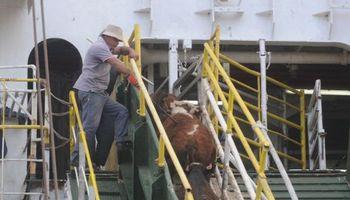 Uruguay exportó más vacunos en pie durante el 2014