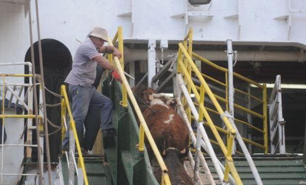 Turquía no compró bovinos en pie a lo largo del 2014 y complicó el negocio de Uruguay. Foto: Archivo