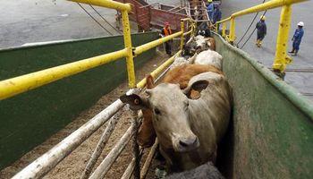 Argentinos consultan menos por ganado en pie de Uruguay