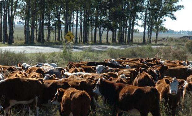 Prevén que la ganadería uruguaya continúe ganando protagonismo este año como una fuerte generadora de riquezas.