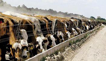 Engorde bovino: a la espera de la sanción definitiva