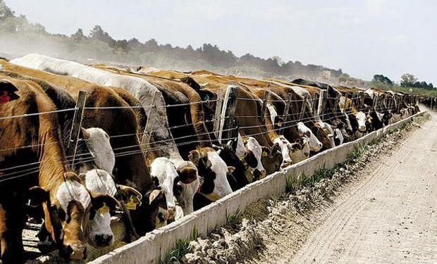 Toda carne destinada al consumo ya sea interno o de exportación, deberá llevar una leyenda.