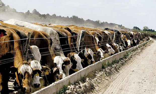 En el país ya hay 28 establecimientos certificados para participar de la cuota y unos 20.000 animales que pueden ser procesados.