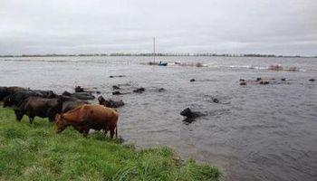 Preocupa la crecida de los ríos