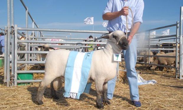 Todo el potencial del ganado ovino en AgroActiva