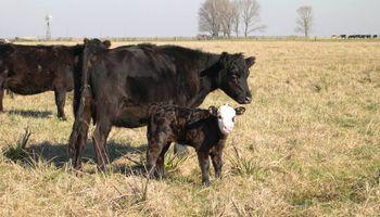 Claves para una ganadería competitiva