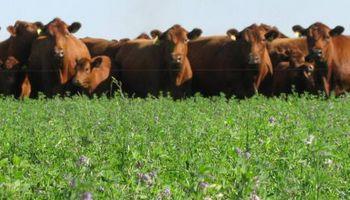 Instalan cámaras para medir el metano de las vacas