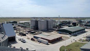 El maíz le permite a la Argentina reducir hasta un 65 % la emisión de GEI