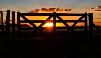 Estudios profesionales que se dedican al asesoramiento agropecuario: ¿Renta de tercera o de cuarta categoría?