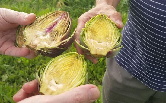 Desconocimiento del cultivo y cuestionamientos por el costo son algunos de los factores que inciden en la baja de consumo del alcaucil