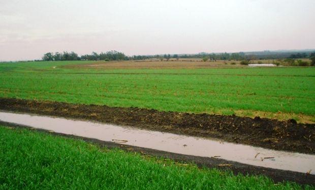 El agua y la temperatura definen los rindes en el agro.