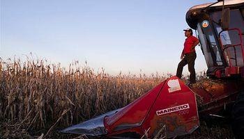 Una mirada 360° sobre el maíz: estiman que el cereal genera 172 mil puestos de trabajo