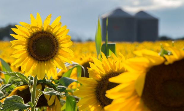 La industrialización del grano aumentó más del 4%