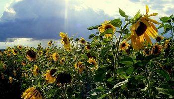 Santa Fe: con buenas condiciones comenzó la siembra de girasol
