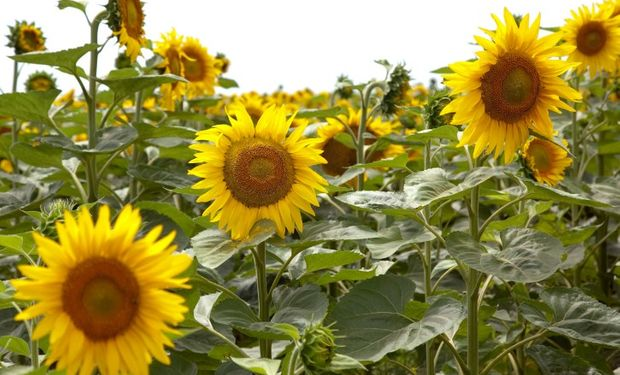 Beneficiará a alrededor de 1.000 productores de la zona.