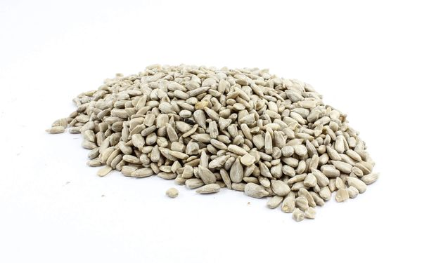 Germinando ideas: de forma gratuita, presentan más de 330 trabajos científicos relacionados a la semilla